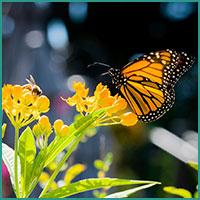Insekten Nektar und Blumen zur verfügung